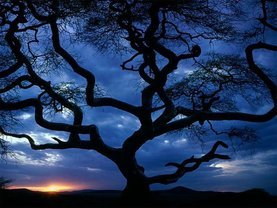 Large_34_tanzania_tree_sceniclandscapes_naturewallpaper_l