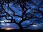 Thumb_34_tanzania_tree_sceniclandscapes_naturewallpaper_l