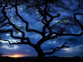 Large_large_34_tanzania_tree_sceniclandscapes_naturewallpaper_l