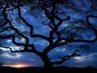 Thumb_large_34_tanzania_tree_sceniclandscapes_naturewallpaper_l